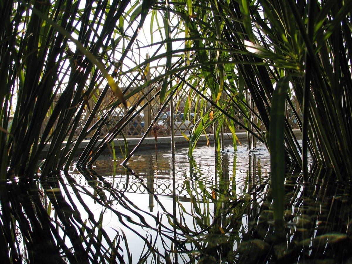 FormedAcqua-giardino-acquatico-ombreggiamento-bambu