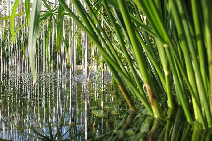 The benefits of aquatic plants
