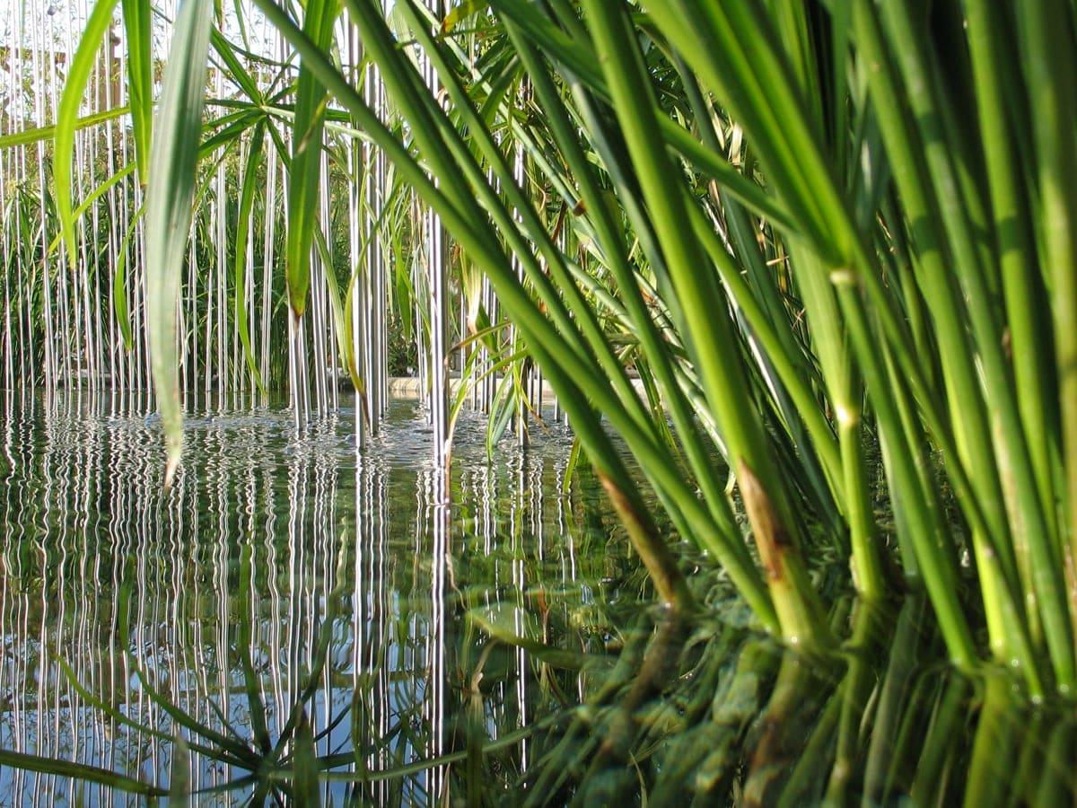 I benefici delle piante acquatiche forme d 39 acqua for Solo piante