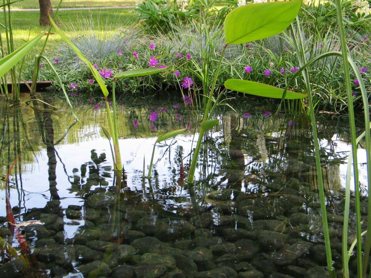 FormedAcqua-giardino-acquatico-piante-palustri