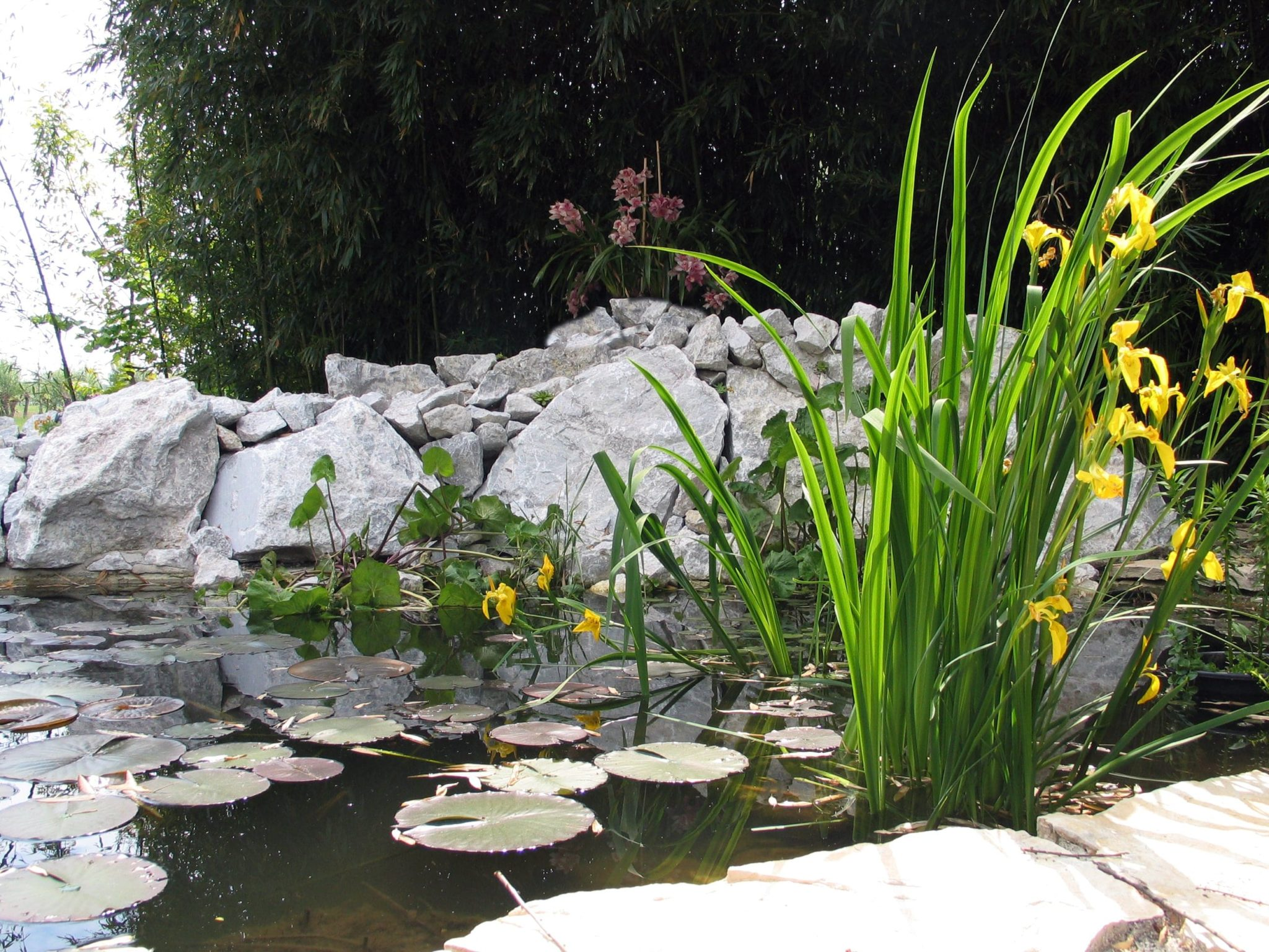 FormedAcqua-laghinaturali-iris