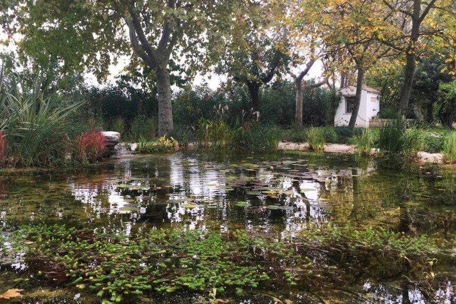 Water garden – Casette d'Ete (FM)