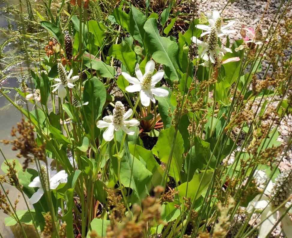 forme-dacqua_biolago_giardino-dacqua_4-1