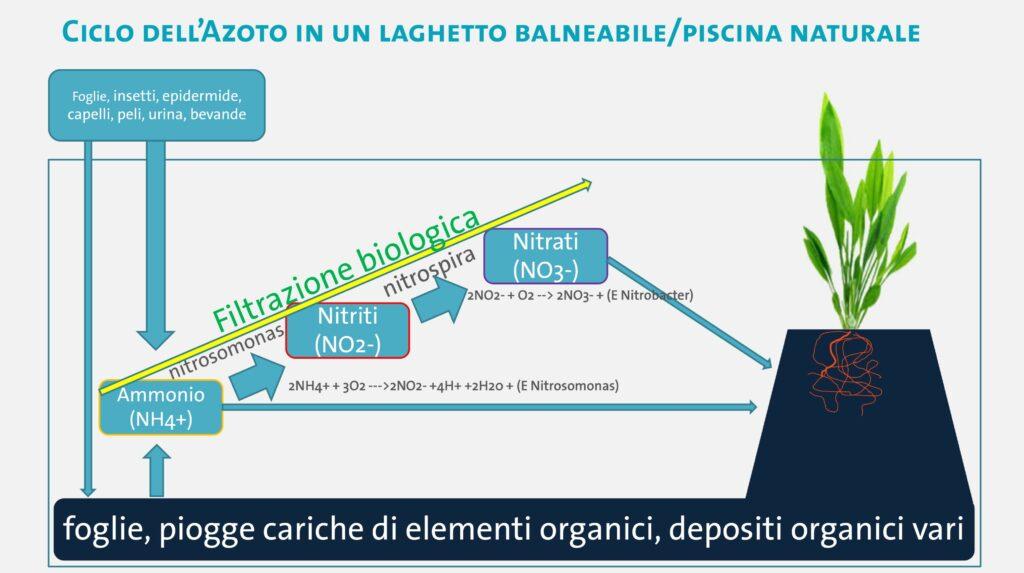 forme-dacqua_ciclo-dellazoto_OASE_2-2-1024x573